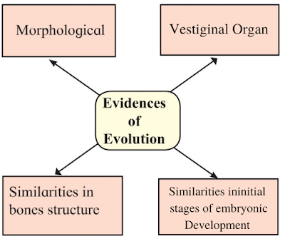 Class 10 heredity and Evolution textbook solutions