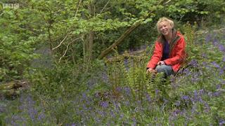 Carol Klein in woodlands