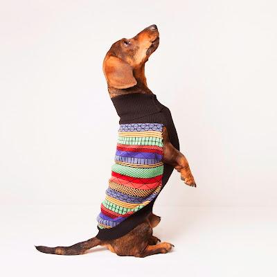 Jersey para perro modelo Dogster