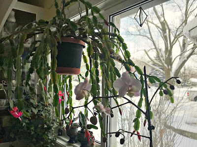 January 1, 2018 Enjoying a cascade of flowers from the inside of our kitchen window.