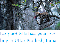 https://sciencythoughts.blogspot.com/2019/12/leopard-kills-five-year-old-boy-in.html