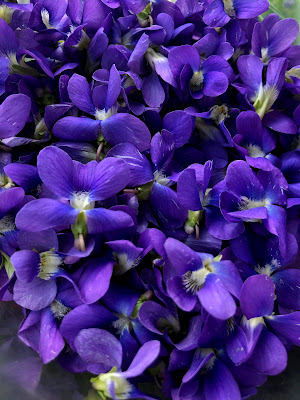collection of violet blossoms