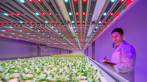 GrowWise City Farming de Philips en Eindhoven (Holanda)