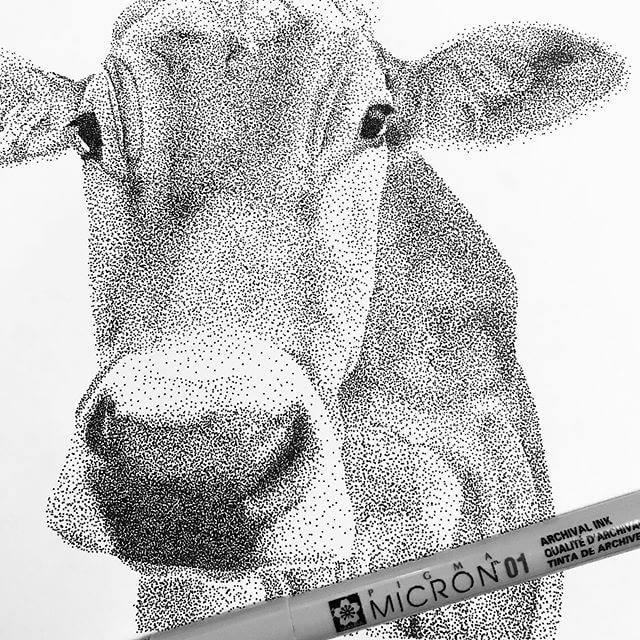 02-Curious-Cow-Kelsey-Hammerton-www-designstack-co