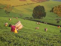 Pertanian Menggunakan Kearifan Lokal, Apa Maksudnya?