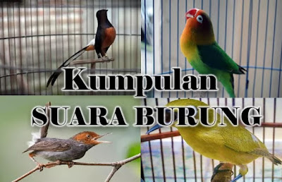Download Suara Burung Mp3