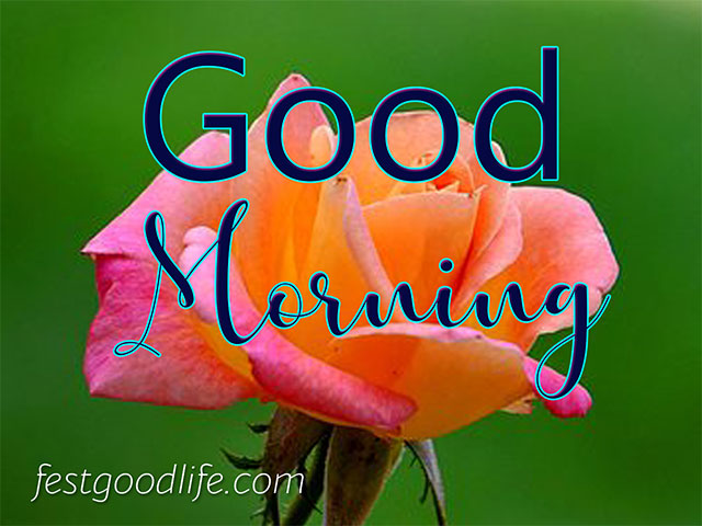 best good morning images free download for whatsapp