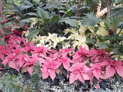 Allan Gardens Conservatory 2019 Winter Flower Show eightteen by garden muses--not another Toronto gardening blog