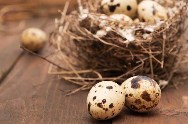 ما لا تعرفه عن فوائد بيض السمان..يقاوم الإكتئاب ويقوي المناعة