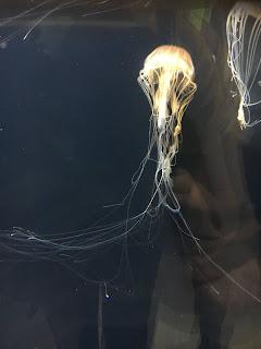 葛西臨海水族園のクラゲ