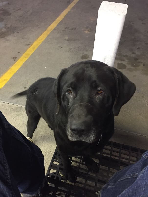 40 Heartwarming Pictures Of Animals - While He's Not As Cute As Some Of The Dogs On Here, Meet Bruce, The Big Ol' Fat Boy Who Visits Me At Work For Some Free Grub