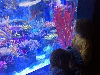 Field Trip With the Grandboys - Birch Aquarium