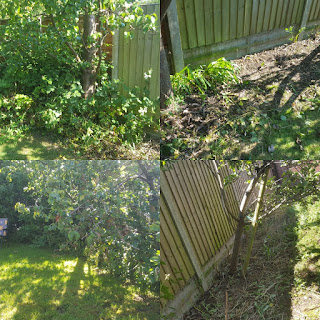 Before and After in my Garden