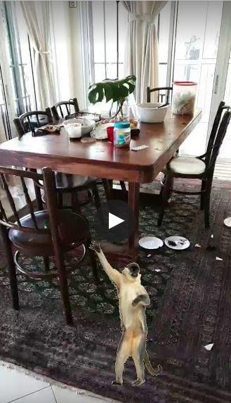 Monkeys Attack