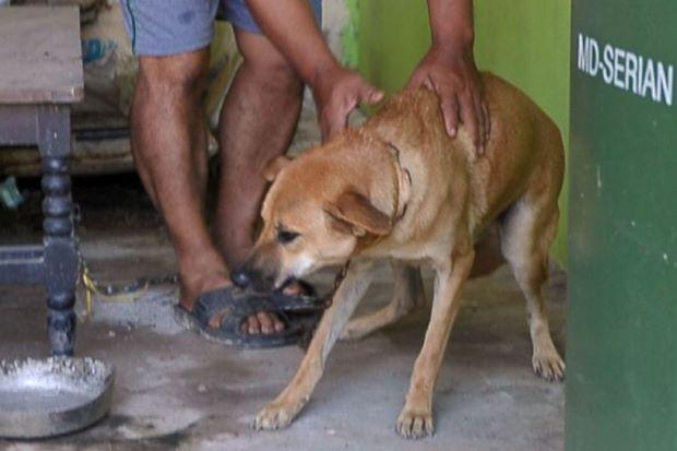 Bahaya konsumsi daging anjing