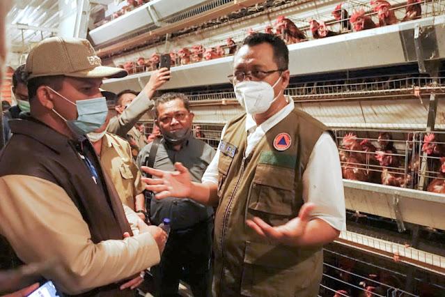 Gubernur optimis, Dompu bisa jadi daerah swasembada telur dan daging