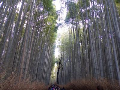 bosque bambu kioto