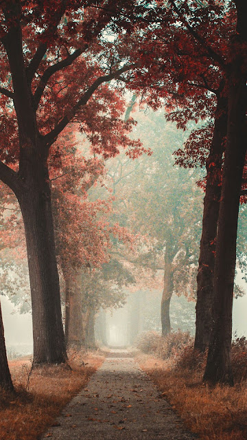 Autumn, fog, trees, forest, alley, road