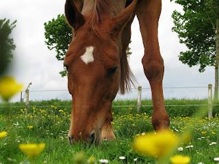 Le cheval est un herbivore et ne doit pas rester l'estomac vide.