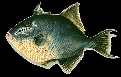 Filetes de peixe porco