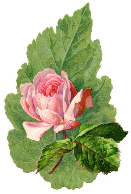 Vintage Image Pink Rose Leaf Clip Art