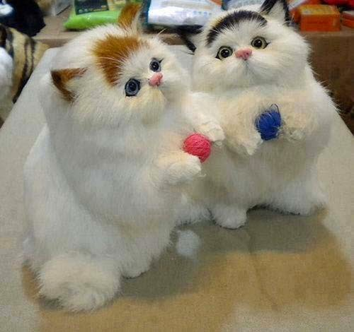 wallpaper bayi kucing lucu
