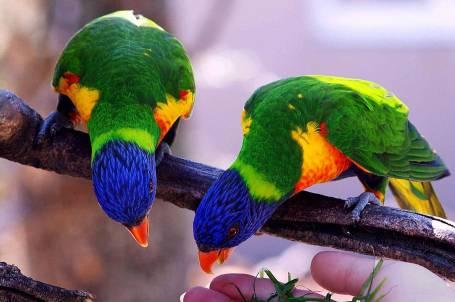 Moral Story For Kids-Fake parrot story, Nakli tote ki kahani