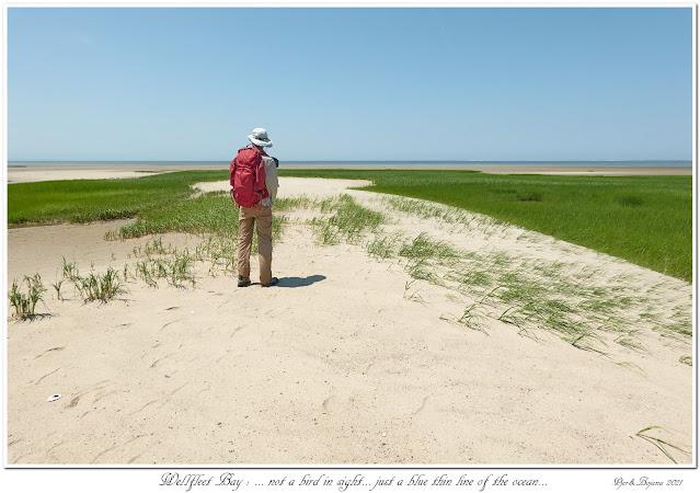 Wellfleet Bay: ... not a bird in sight... just a blue thin line of the ocean...
