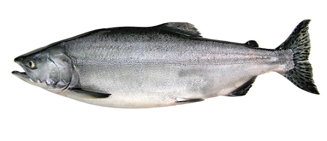मछली  Salmon Fish