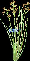 Manfaat Organisme Pengganggu tanaman atau gulma