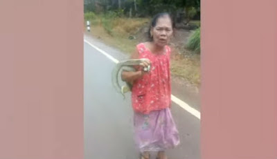 Nenek bawa ular king kobra di jalan