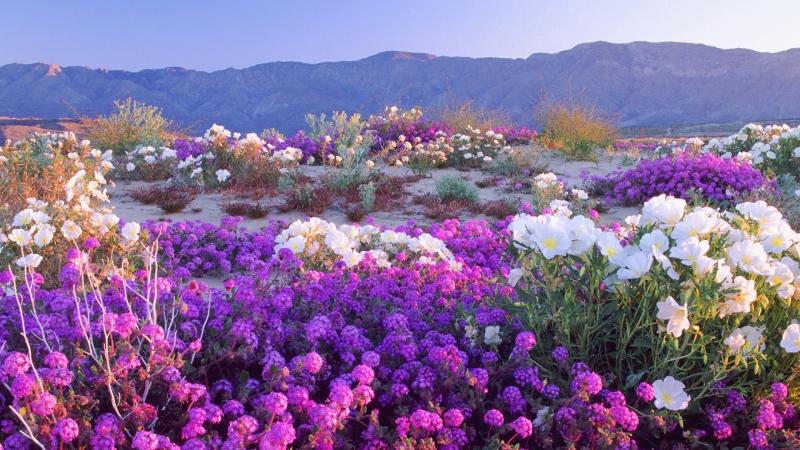 flowers natural scenery photos flower wallpaper