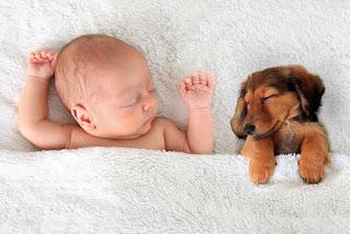 Cómo preparar a tu perro para un nuevo bebé