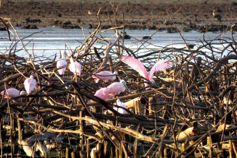 Centenas de pássaros trouxeram cores à Barragem de Iraí, afligida pela seca