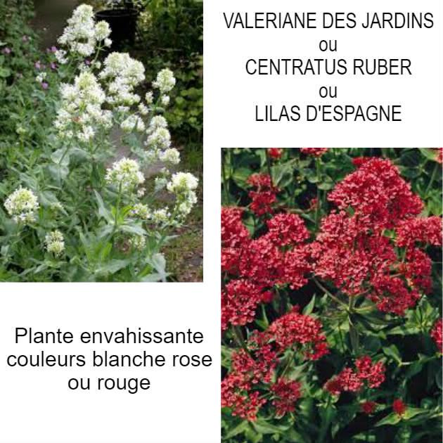 Promenade Au Jardin De Lili Dans Le Poitou Valeriane Des Jardins