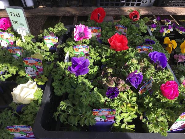 玄関やお庭を花で彩りたくなってきませんか?