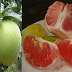 10 Health Benefits Of Pomelo That Will Surely Give You A Big Surprise!