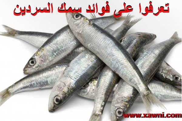 تعرفوا على فوائد سمك السردين