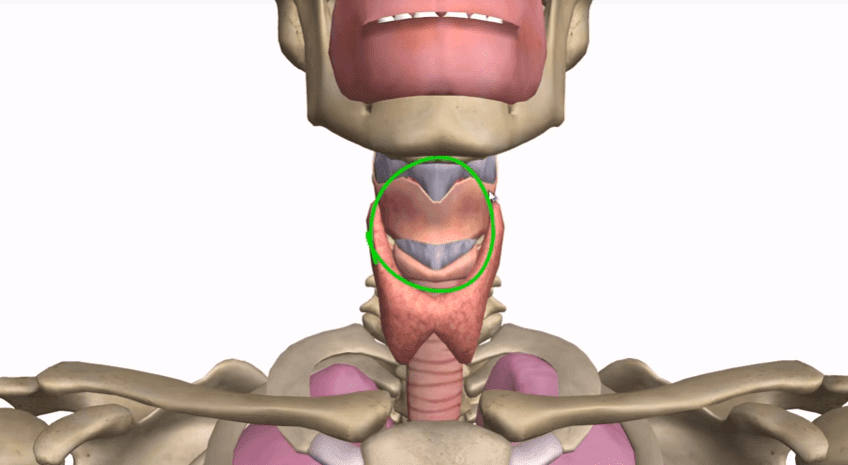Laryngal-trauma