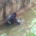 Detik Cemas Gorila (Harambe) 17 Tahun Ditembak Mati, Budak Tiga Tahun Jatuh Dalam Kandang