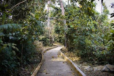 Walkway of Satchari National Park