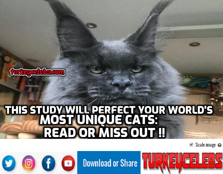 world's largest cats,wild cats you probably didn't know exist,won't,world's biggest cat,cat breeds that don't shed,world's smallest cat ever,world's smallest cat video,world's smallest cat species,backflip,boomer,the dodo animals,rescuing animals,catmantoo,didga,most talented cats,wildlife videos,most talented cat in the world,didga cat,didga cat skateboard,skateboard cat,the dodo cat,the dodo digda