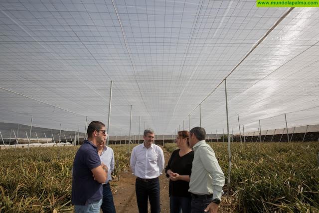 Los agricultores de las Islas dispondrán de una línea de ayudas específica para nuevos invernaderos o adaptar los existentes a necesidades de cultivos, como la piña
