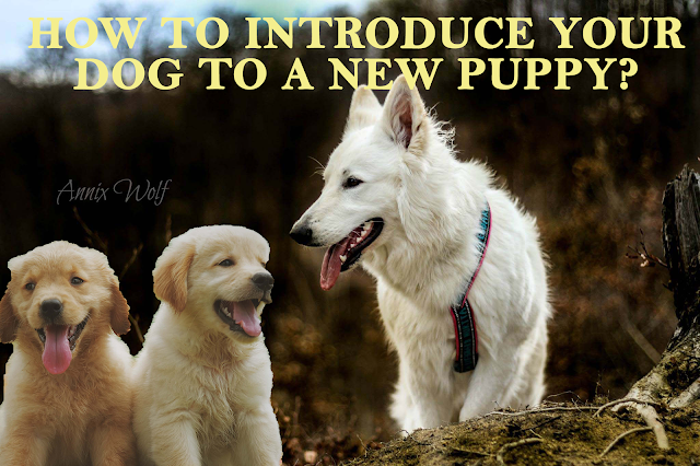 Introducing your dog to a new puppy. 14 amazing tips for a seamless transition.