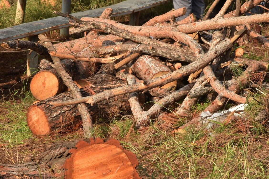 Διανομή ξύλων σε δικαιούχους του Κοινωνικού Παντοπωλείου δήμου Νέας Προποντίδας