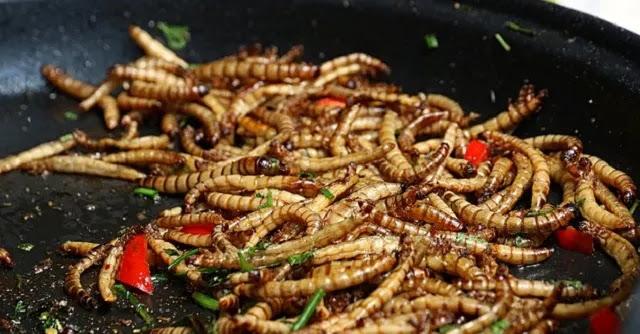 Η μασονική Ευρώπη εγκρίνει τα σκουλήκια ως ασφαλή και υγιεινή τροφή για τον άνθρωπο