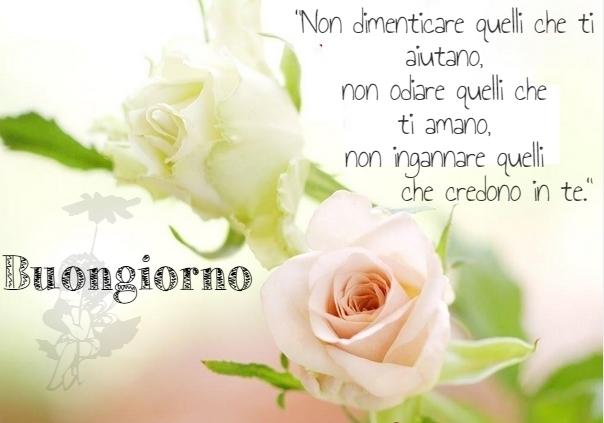 Frasi d 39 amore buongiorno con rose bianche for Buongiorno o buon giorno immagini