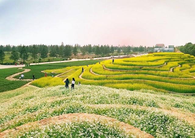 Explore The Rice Terraces Northwest In The Heart Of Hanoi