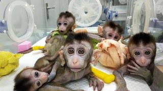 Harganya Mahal, Lab China Sampai Kekurangan Stok Monyet Untuk Uji Coba Vaksin Corona