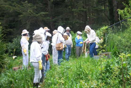 Ελάτε να μάθουμε πως λειτουργούν οι Μελισσοκομικοί Σύλλογοι στο εξωτερικό